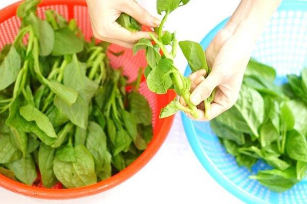sơ chế rau ăn với bao tử lưỡi heo hầm tiêu